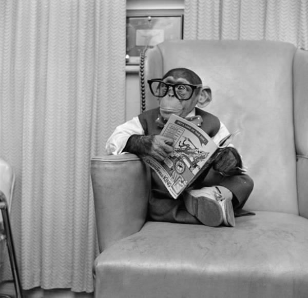 Comic Book Photograph - Clever Monkey by Vecchio
