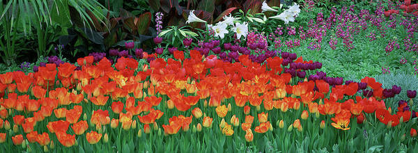 Wall Art - Photograph - Close-up Of Flowers In A Garden by Panoramic Images