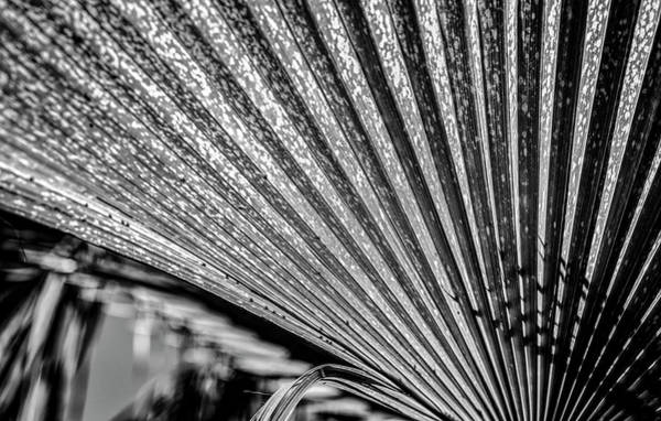 Wall Art - Photograph - Close-up Of Palm Leaves, California, Usa by Panoramic Images