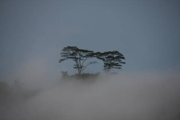 Wall Art - Photograph - Cloud Forest, Sri Lanka by David Hosking