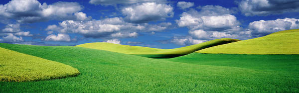 Wall Art - Photograph - Clouds Over A Canola Field, Palouse by Panoramic Images
