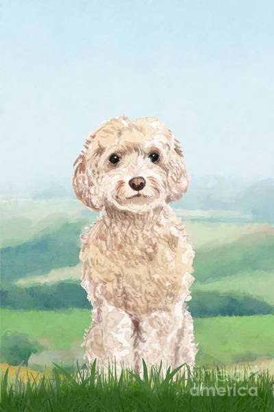 Pedigree Painting - Cockapoo by John Edwards