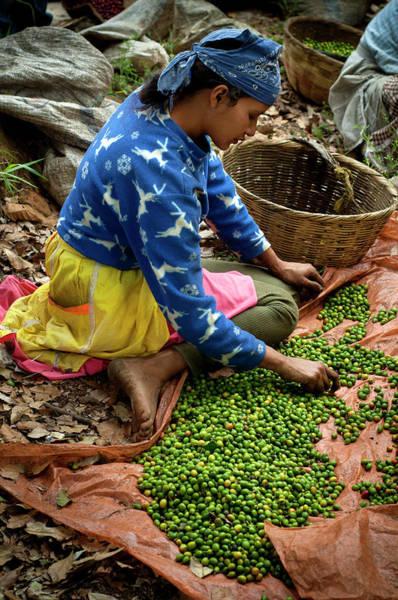 El Salvador Photograph - Coffee Picker, El Salvador by John Coletti