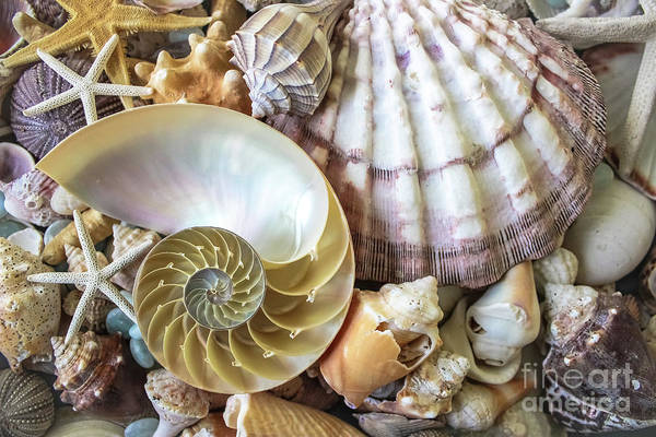 Wall Art - Photograph - Collecting Shells by Colleen Kammerer