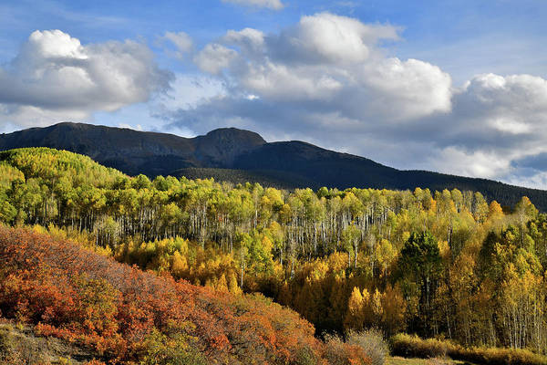 Photograph - Colorado Fall Colors by Ray Mathis