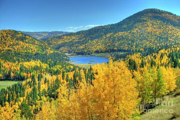 Photograph - Colorado Gold by Tony Baca