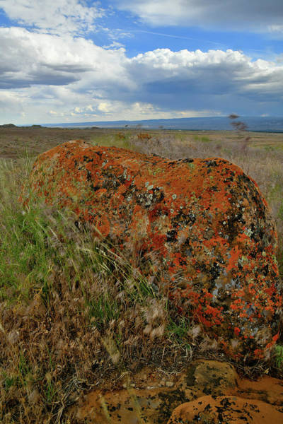 Photograph - Colorful Lichen-covered  Boulders In Book Cliffs by Ray Mathis