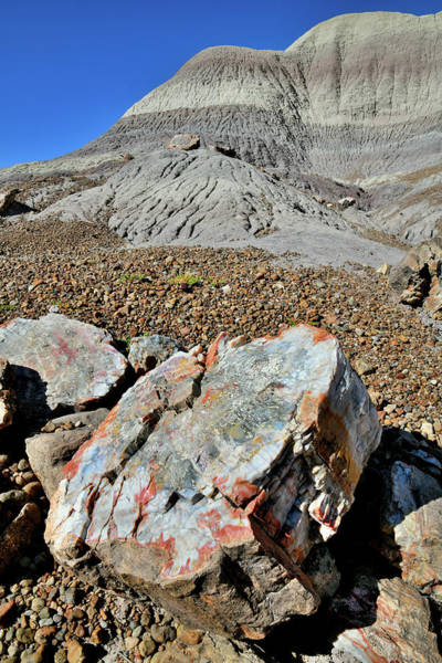 Photograph - Colorful Petrified Wood In Blue Mesa by Ray Mathis