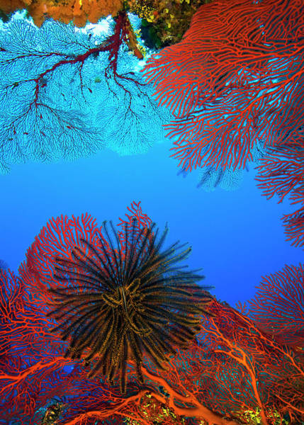 Undersea Photograph - Colorful Soft Corals On Undersea Reef by Na Gen Imaging