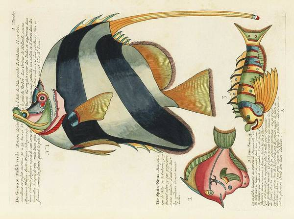 Wall Art - Painting - Colourful And Surreal Illustrations Of Fishes Found In Moluccas  Indonesia  And The East Indies By L by Celestial Images