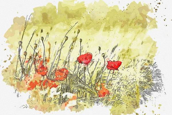 Wall Art - Painting - Common Poppies -  Watercolor By Ahmet Asar by Ahmet Asar