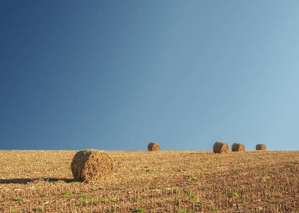 Stalk Photograph - More Corn Stalk Bales by Todd Klassy