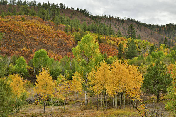 Photograph - County Road 5 Fall Colors by Ray Mathis