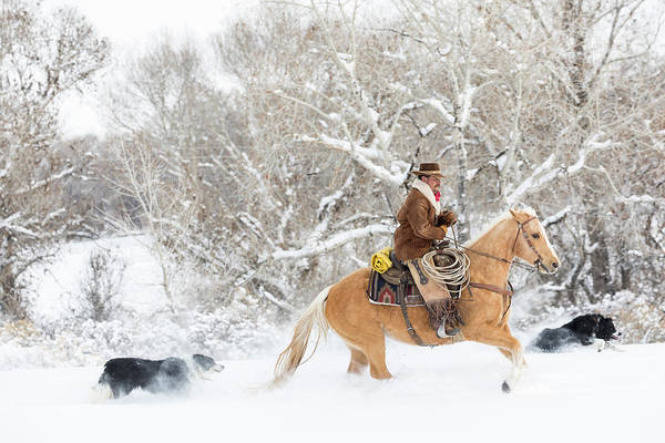 Wall Art - Photograph - Cowboy Riding His Horse In Winter by Darrell Gulin