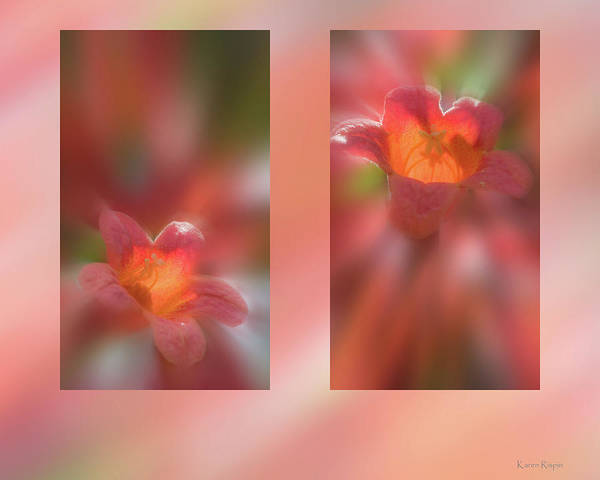 Photograph - Crossvine by Karen Rispin