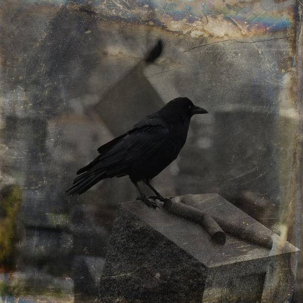 Wall Art - Photograph - Crow In The Darkness by Gothicrow Images
