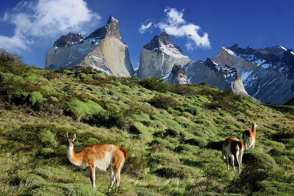 Antartica Wall Art - Photograph - Cuernos Del Paine by Photo ©tan Yilmaz