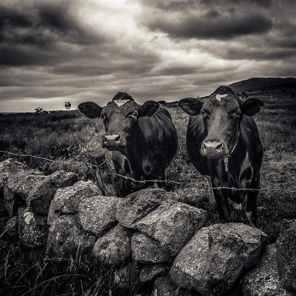 Photograph - Curiosity by Alan Campbell