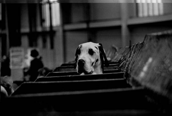Exhibition Photograph - Curious Hound by Evening Standard