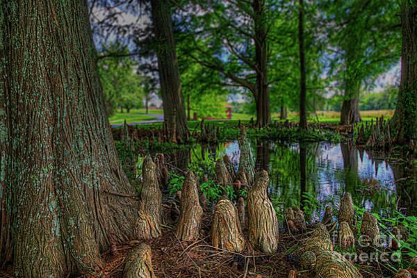Wall Art - Photograph - Cypress Knees by Larry Braun
