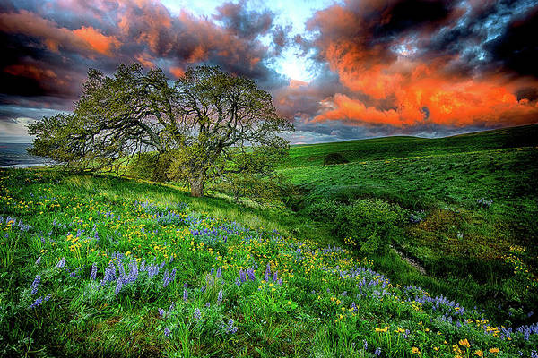 Balsamorhiza Sagittata Photograph - Dalles Mountain Ranch State Park by Myer Bornstein