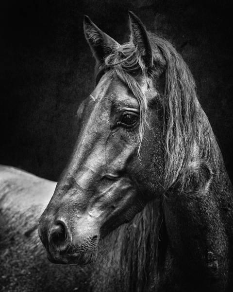 Wall Art - Photograph - Dark Horse by Ron McGinnis