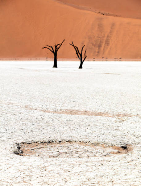 Arid Climate Wall Art - Photograph - Dead Black Trees In The Desert by Kim Visser