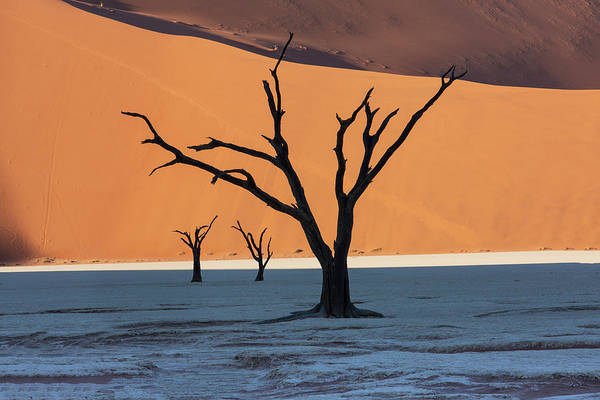 Wall Art - Photograph - Dead Silhouetted Trees In Deadvlei by Darrell Gulin