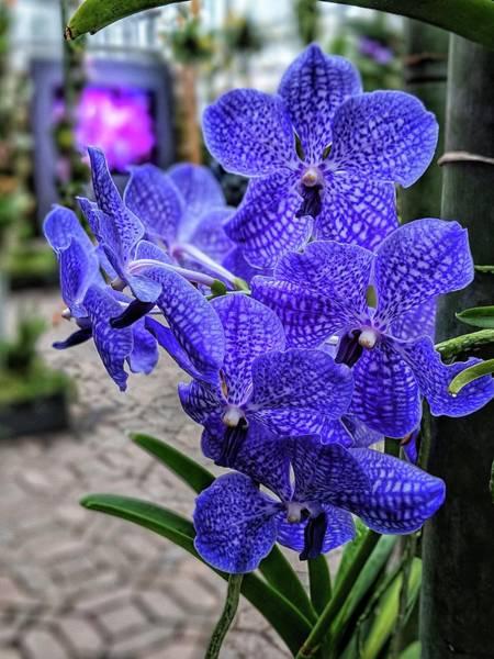 Photograph - Deep Purple Orchid by Portia Olaughlin