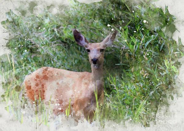 Digital Art - Deer by Mark Jackson