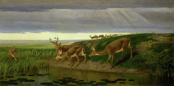 Wall Art - Painting - Deer On The Prairie by William Holbrook Beard