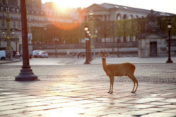 Out Of Context Photograph - Deer Standing At Place Concorde by Chris Tobin