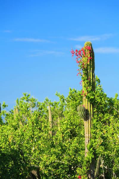Wall Art - Photograph - Desert Bloom After Winter Rains by Stuart Westmorland