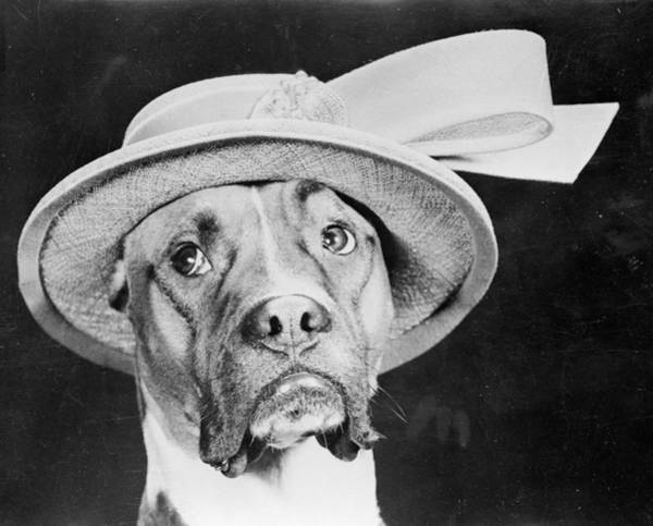 Straw Hat Photograph - Doggy Hat by Keystone Features