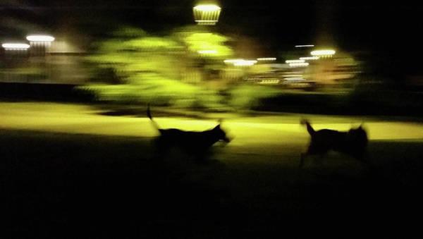 Wall Art - Photograph - Dogs' Chase by Rafa Rivas
