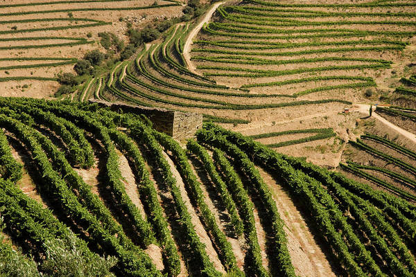 Douro Wall Art - Photograph - Douro Valley by Luisportugal