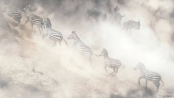 Wall Art - Photograph - Dramatic Dusty Great Migration In Kenya by Susan Schmitz