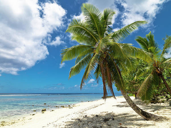 Rarotonga Photograph - Dream Beach by Mlenny