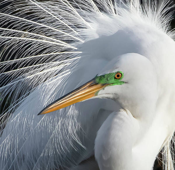 Wildbird Photograph - Dressed For The Party by Carl Amoth