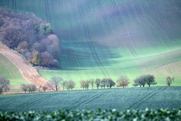 Art Print featuring the photograph Autumn In South Moravia 1 by Dubi Roman