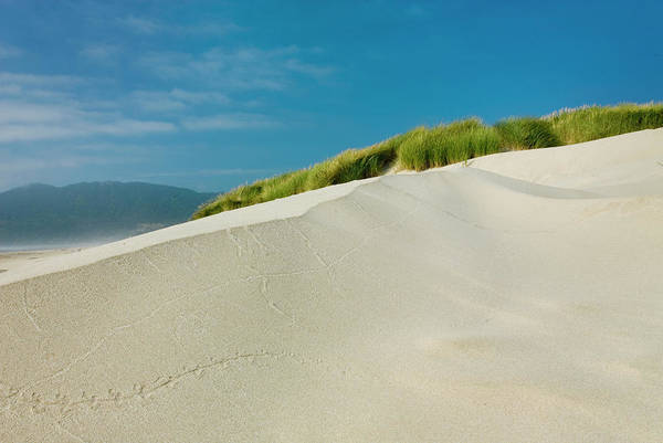 Oregon Dunes Photograph - Dunes And Dune Grass At Nehalem State by Alan Majchrowicz