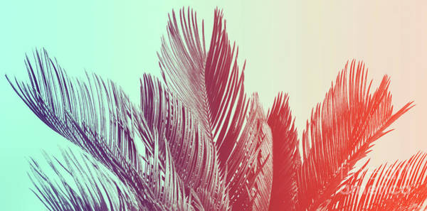 Photograph - Duotone Background Of Tropical Palm Leaves by Michal Bednarek