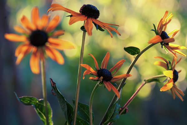 Wall Art - Photograph - Echinacea Garden by Bonnie Bruno