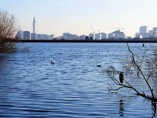 Photograph - Edgbaston Reservoir by Tony Murtagh