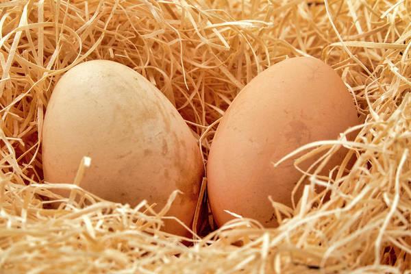 Photograph - Eggs In A Straw Nest by Fabrizio Troiani