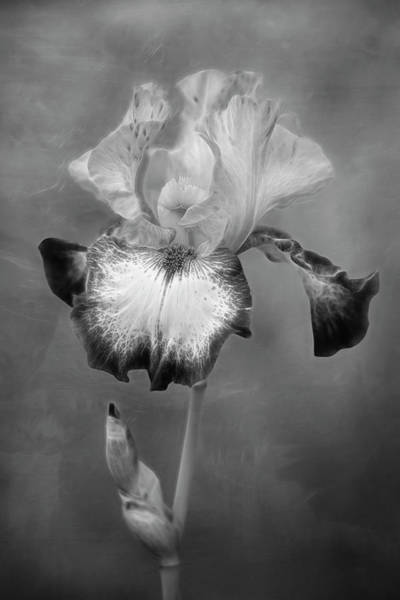 Photograph - Electric Bearded Iris Flower by Susan Candelario