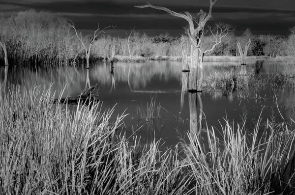 Photograph - Elm Lake 5 by David Heilman