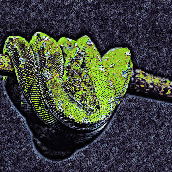 Mixed Media - Emerald Tree Boa by Susan Maxwell Schmidt