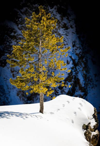 Photograph - Evergreen by Karen Wiles