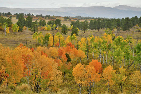 Photograph - Fall Colors Near Ridgway Colorado by Ray Mathis